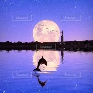 自然,風景,イルカ,満月