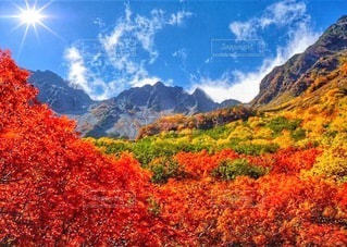自然の写真・画像素材[8744]