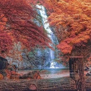 自然の写真・画像素材[8719]