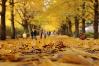 秋の写真・画像素材[245285]