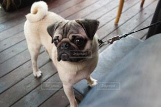 犬の写真・画像素材[466126]
