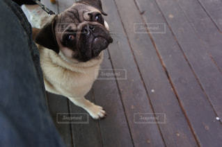 犬の写真・画像素材[466127]