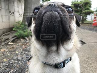 犬の写真・画像素材[487458]