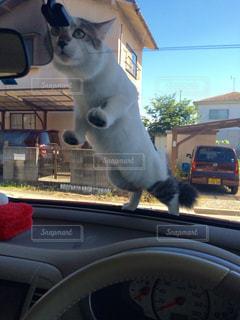 猫の写真・画像素材[243412]