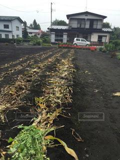 畑 - No.309976