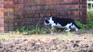 猫の写真・画像素材[243678]