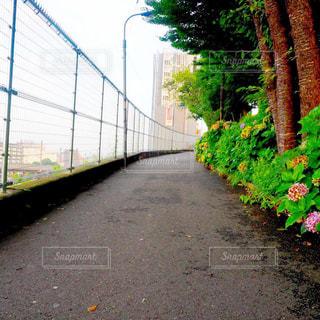 通りの脇に木がある道の写真・画像素材[2408777]