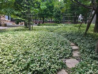 庭の茂みのグループの写真・画像素材[1328867]