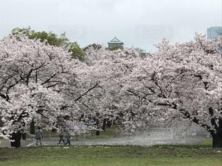 春の写真・画像素材[641765]