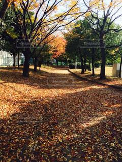 秋の写真・画像素材[243739]