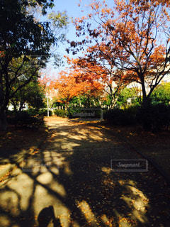 秋の写真・画像素材[243740]