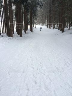 冬の写真・画像素材[243744]