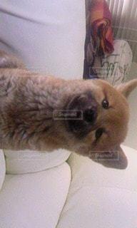 犬の写真・画像素材[55139]