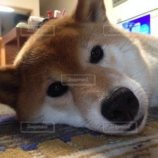 犬の写真・画像素材[72797]
