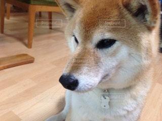 No.81338 犬