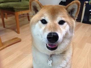 No.81340 犬
