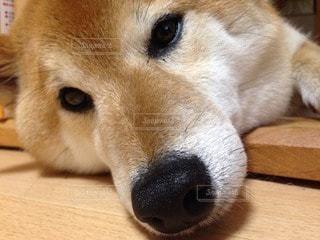 犬 - No.86599