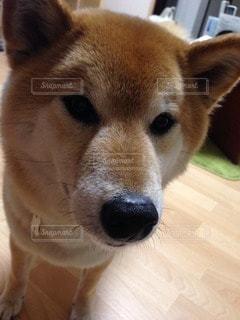 犬 - No.116439