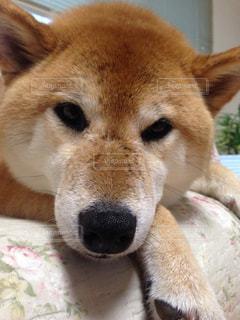 犬 - No.149123