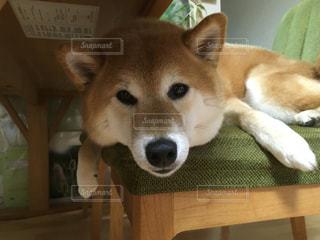 No.178051 犬