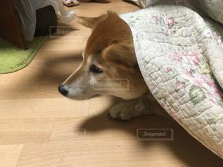 犬 - No.259764