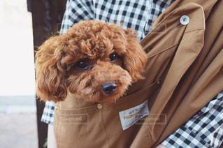 袋を持った茶色の犬の写真・画像素材[3154746]