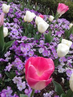 花の写真・画像素材[244114]