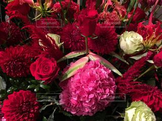 花の写真・画像素材[244741]