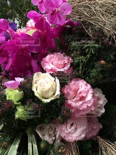 花の写真・画像素材[244743]
