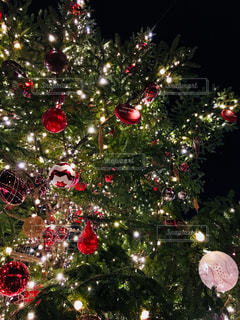 クリスマス ツリーの写真・画像素材[869899]
