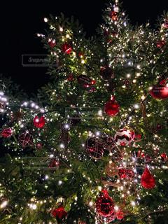 クリスマス ツリーの写真・画像素材[869900]