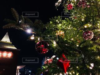 夜ライトアップされたクリスマス ツリーの写真・画像素材[869902]