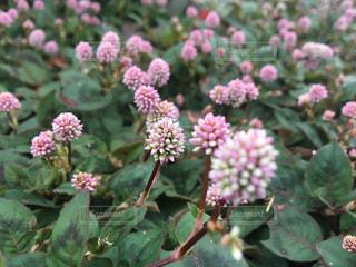花の写真・画像素材[244632]
