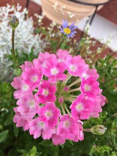 花の写真・画像素材[244769]