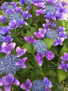 花の写真・画像素材[549312]