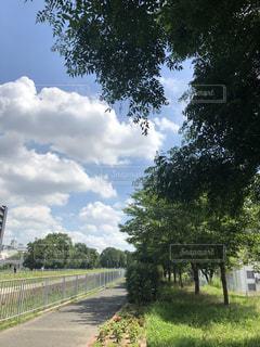 公園の木の写真・画像素材[1291772]