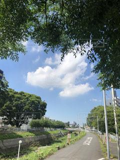 道の端に木のパスの写真・画像素材[1291775]