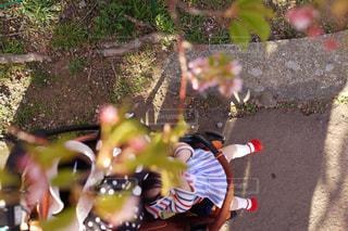河津桜の写真・画像素材[1070175]