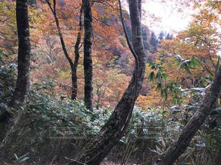 No.244972 風景