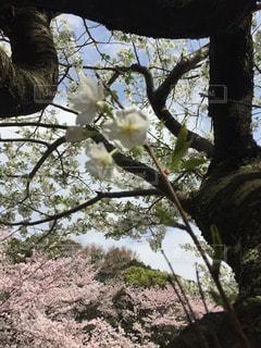 お花畑の写真・画像素材[116235]