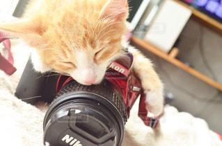 猫の写真・画像素材[598847]
