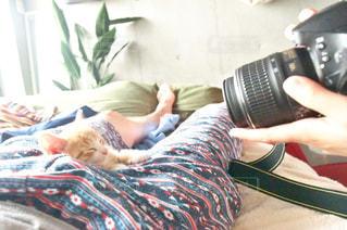 猫の写真・画像素材[599396]