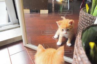 鏡の写真・画像素材[599414]