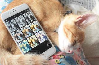 iphoneの写真・画像素材[603012]