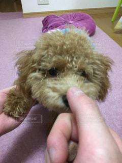 犬の写真・画像素材[245366]