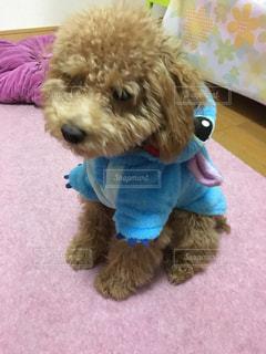 犬 - No.245369