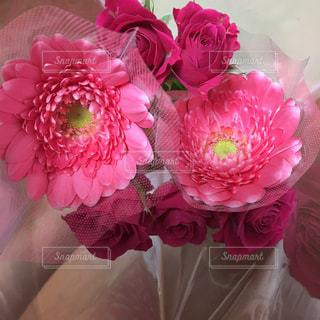 花の写真・画像素材[275574]