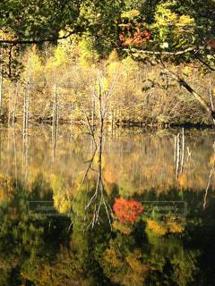 自然の写真・画像素材[245892]