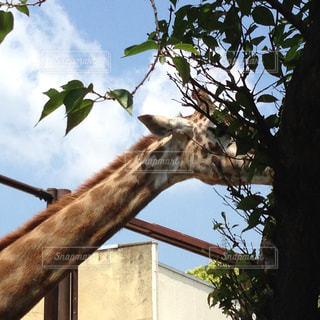 動物の写真・画像素材[246840]