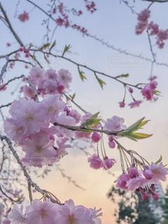花の写真・画像素材[561496]